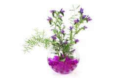 Flores selvagens em um vaso Fotografia de Stock Royalty Free