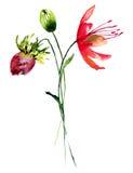 Flores selvagens estilizados Imagem de Stock