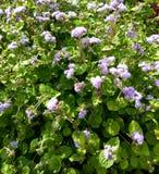 Flores selvagens Fundo floral Foto de Stock