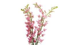 Flores selvagens isoladas fotos de stock