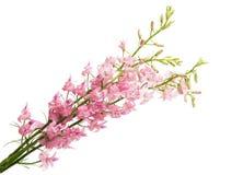 Flores selvagens isoladas imagens de stock royalty free