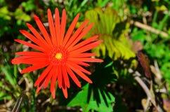 Flores selvagens na flor Fotografia de Stock