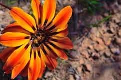 Flores selvagens na flor Fotos de Stock Royalty Free