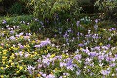 Flores selvagens na mola Fotos de Stock Royalty Free