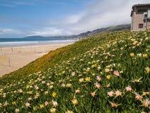 Flores selvagens na praia Fotografia de Stock Royalty Free