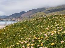Flores selvagens na praia Imagem de Stock