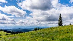 Flores selvagens no alpino alto de Tod Mountain Fotografia de Stock Royalty Free