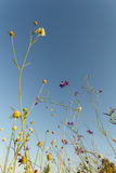 Flores selvagens no prado Fotos de Stock
