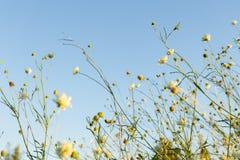 Flores selvagens no prado Imagem de Stock Royalty Free