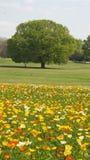 Flores selvagens para a vida da mola no campo aberto fotos de stock royalty free