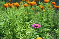 Flores selvagens pela borda da estrada em Tailândia do sul fotografia de stock royalty free
