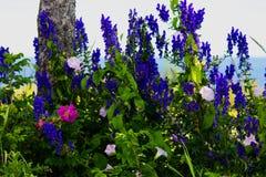 Flores selvagens pela estrada Fotos de Stock Royalty Free