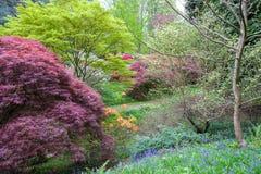Flores selvagens, rododendros e azáleas de florescência em uma floresta aberta no sul de Inglaterra fotos de stock royalty free