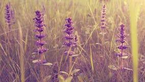 Flores selvagens românticas no campo da mola Fotografia de Stock