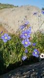 Flores selvagens roxas Fotografia de Stock Royalty Free