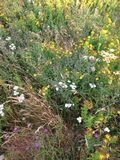 Flores selvagens Terra Nova Imagens de Stock Royalty Free