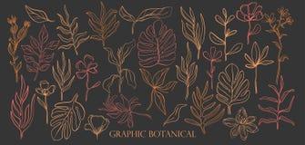 Flores selvagens tiradas mão do estilo ajustado do esboço Linha estilo da natureza, flora do desenho, Botânica tirada mão ilustração do vetor