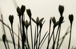 Flores Silhoetted Fotos de archivo libres de regalías