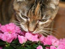 Flores Sniffing do gato Fotografia de Stock