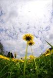Flores sob o céu Imagem de Stock