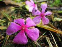 Flores sobre Imagem de Stock