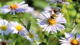 Flores soleadas encantadoras contra la perspectiva de la hierba imagen de archivo libre de regalías