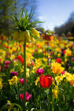 Flores sortidos holandesas 5 fotos de stock