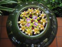 Flores sortidos que flutuam na bacia da exposição foto de stock