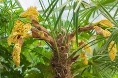 Flores Spicate Imagens de Stock Royalty Free