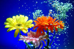 Flores submarinas. Flowers under water in fishbowl Royalty Free Stock Photos