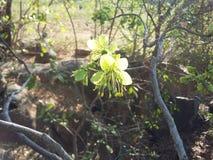 Flores surpreendentes com estames longos fotografia de stock royalty free
