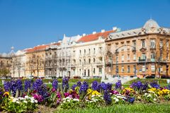 Flores tempranas de la primavera y arquitectura antigua hermosa en una ciudad más baja en Zagreb imagenes de archivo