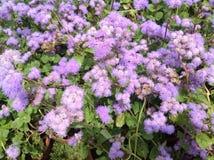 Flores Textured Fotografia de Stock