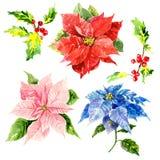 Flores tiradas mão da aquarela com folha e Fotografia de Stock Royalty Free