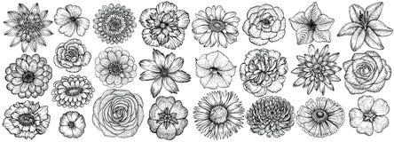 Flores tiradas mão, ilustração do vetor Esboço floral do vintage ilustração do vetor