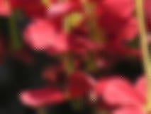 Flores a través del vidrio Fotografía de archivo