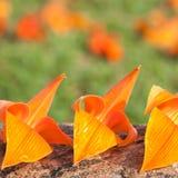 Flores triplas Imagem de Stock