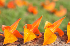 Flores triplas Imagem de Stock Royalty Free