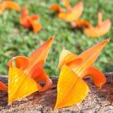 Flores triplas Imagens de Stock Royalty Free