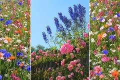 Flores triples del verano Fotos de archivo libres de regalías