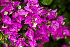 Flores tropicais Fotos de Stock Royalty Free