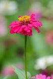 Flores tropicais Foto de Stock Royalty Free