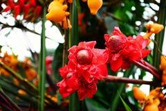 Flores tropicais Fotografia de Stock Royalty Free