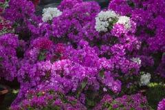 Flores tropicais Fotografia de Stock