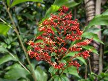 Flores tropicais Imagem de Stock