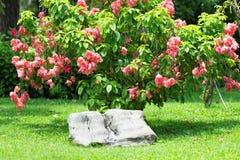 Flores tropicais Imagens de Stock Royalty Free
