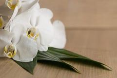 Flores tropicais brancas Copie o espaço Imagens de Stock