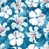 Flores tropicais brancas do hibiscus. fotos de stock royalty free