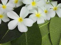 Flores tropicais exóticas Imagens de Stock Royalty Free