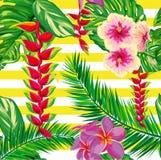 Flores tropicais, folhas de palmeira, flor, tiras Fotos de Stock